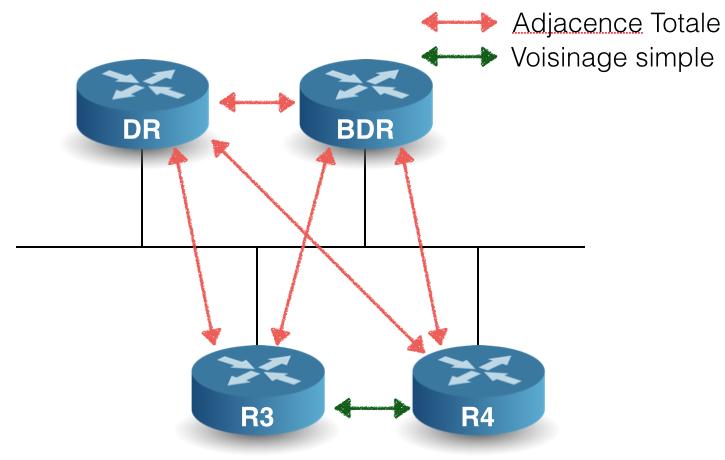 Relation OSPF sur un réseau broadcast entre 4 routeurs